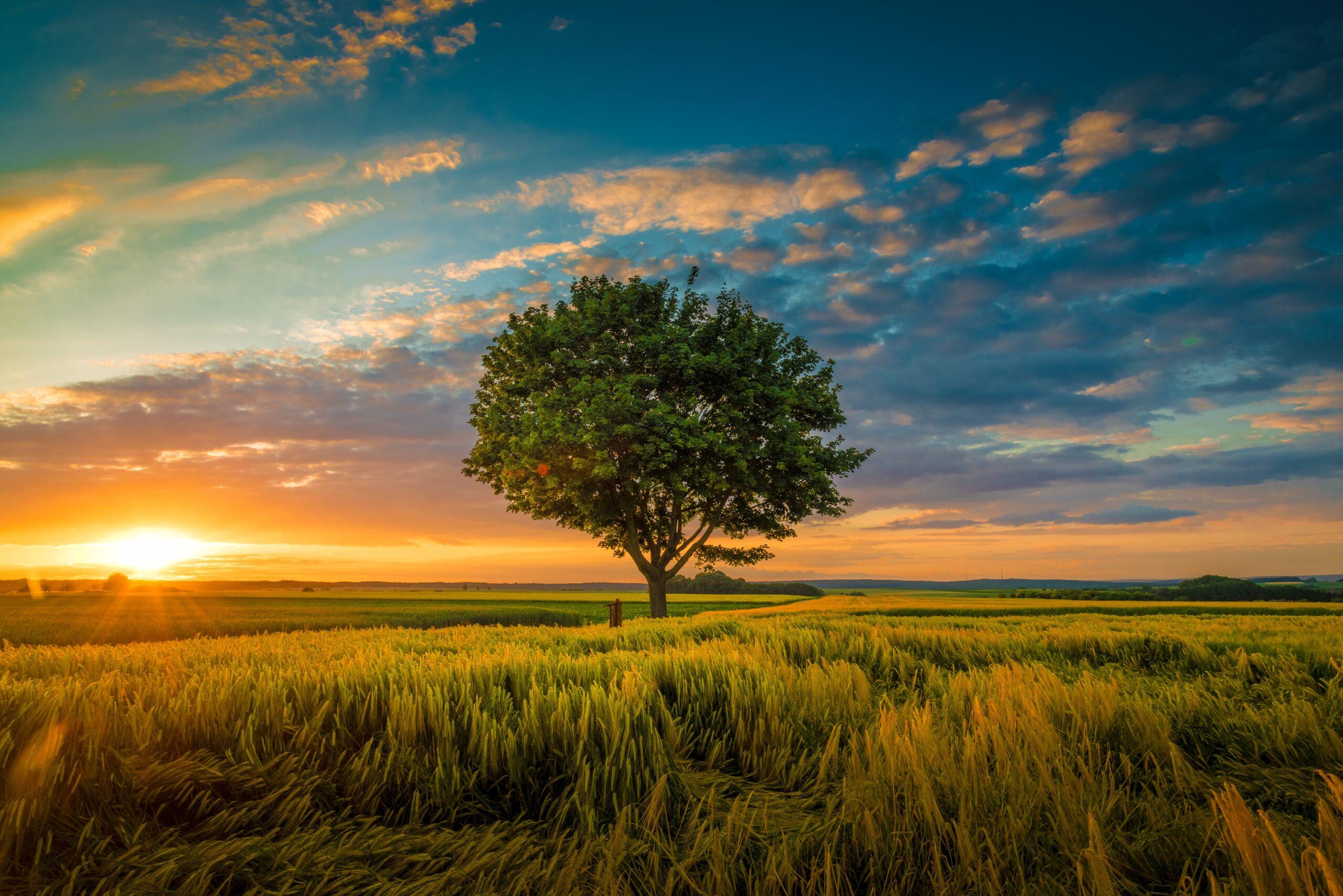 Curățarea și vindecarea arborelui genealogic in 4o de zile